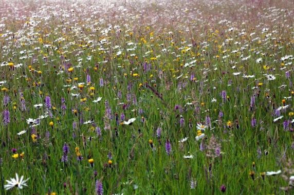 Pentwyn Farm Meadow - Keith Moseley