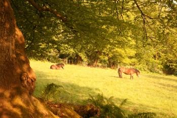 JD_2011_IMG_8127_ponies