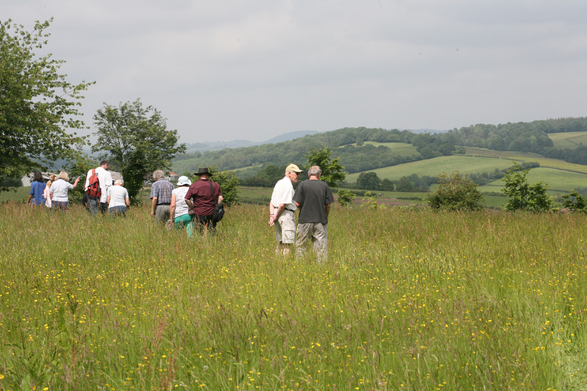 Plant walk at Kingcoed Meadows, MMG Open Day June 2014