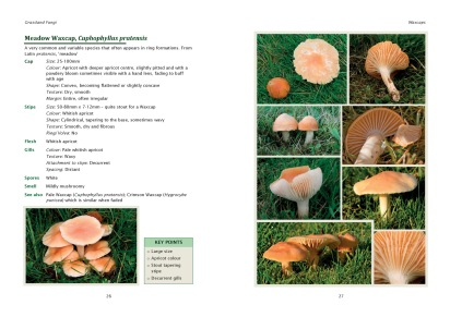 Meadow-Waxcap-pages